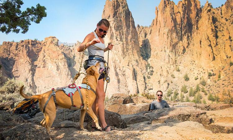 7 Tips para enseñar a tu perro a Escalar y/o hacer Rappel