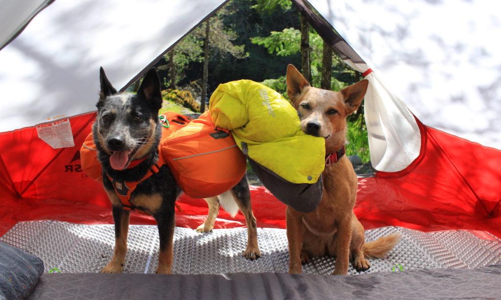 10 Elementos Esenciales Para Perros Mochileros