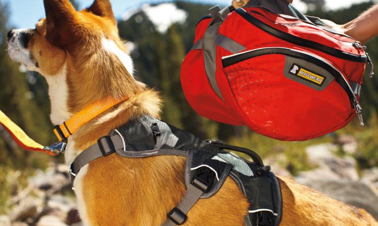 ¿Por que ponerle una mochila a tu perro?