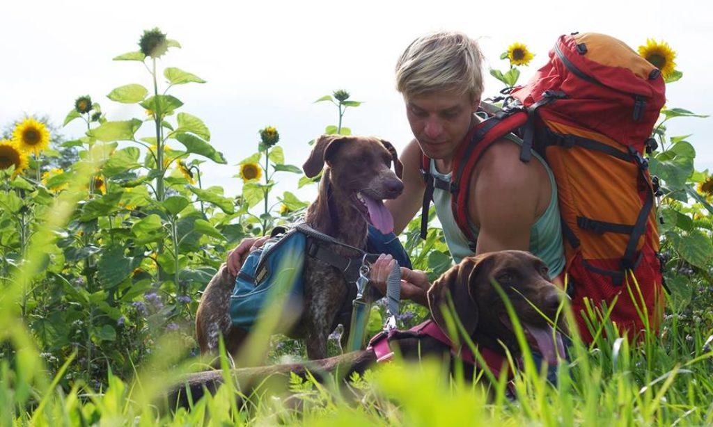 Tips para acampar con tu perro
