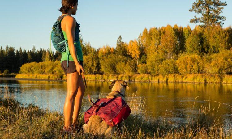 Consejos para salir de trekking con tu perro