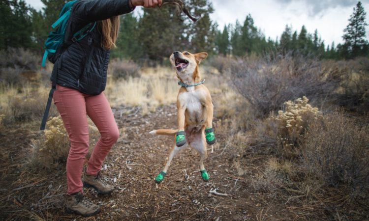 6 Tips para que tu perro se acostumbre a las Botas
